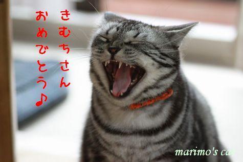 m_0705-aa.jpg